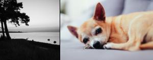 Aktivera Korttidshem   Natur och hund