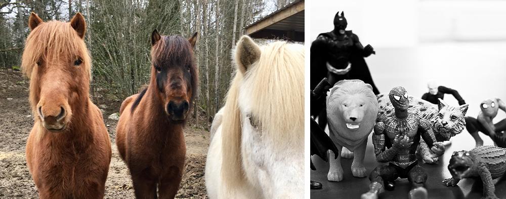 Aktivera Korttidshem | Hästar och leksaker